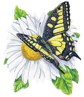 butterfly-nonny-ani…